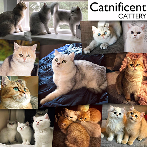 CATNIFICENT BLH 2018