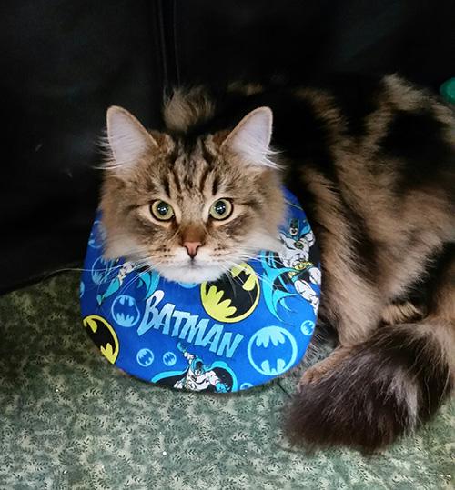 LOL SURPRISE Doll /& pet SUPER B.B bb /& su-purr kitty Cat Cute Festival Gift UK