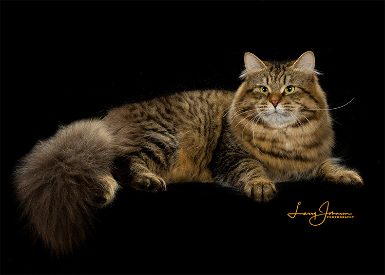 13th Best Cat of the Year: CIELOCH TAKE A CHANCE