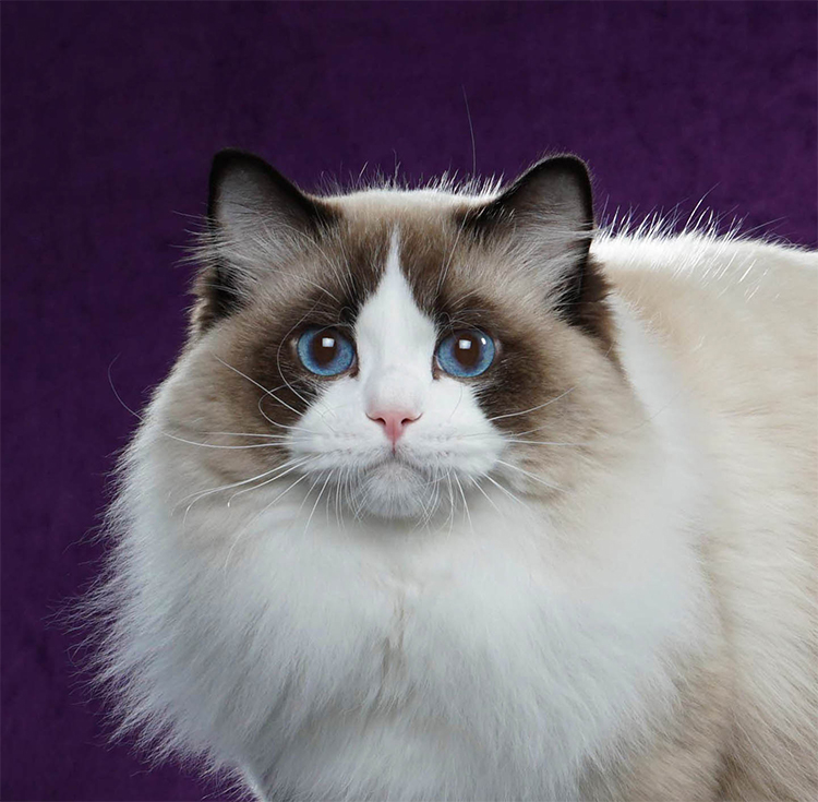 6th Best Cat of the Year: MIRUMKITTY HANDSOME AS HELL