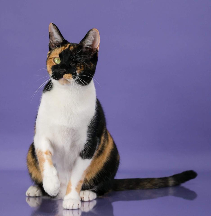 18th Best Household Pet Of The Year: SPECKLED KITTY CAT IRIS