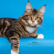 25th Best Kitten Of The Year: CHEMICOONS STEPHEN HAWKING OF LAPD