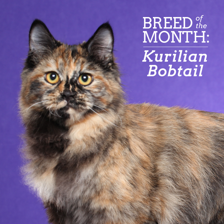 Breed of the Month TV