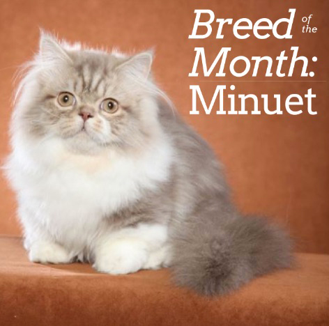 Breed of the Month Home Image BOM font