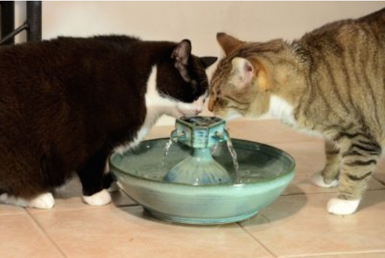 ThirstyCat Fountains Endorsement of Excellence